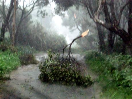 Do có sức gió mạnh đã làm đổ nhiều cây xanh ở khu rừng chõi nguyên sinh và hai bên đường, và một ngôi nhà bị tốc mái. (Nguồn báo Quảng Ninh online)