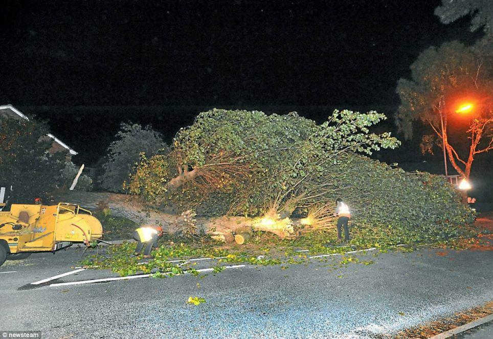Thổi qua: Một 80ft cao Maple Tree nằm trên đường sau khi bị hạ gục bởi gió trong Great Barr, Birmingham vào thứ năm