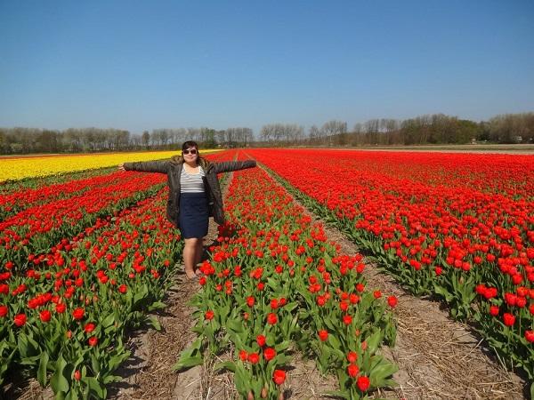 Cánh đồng hoa tulip rực rỡ tại Hà Lan