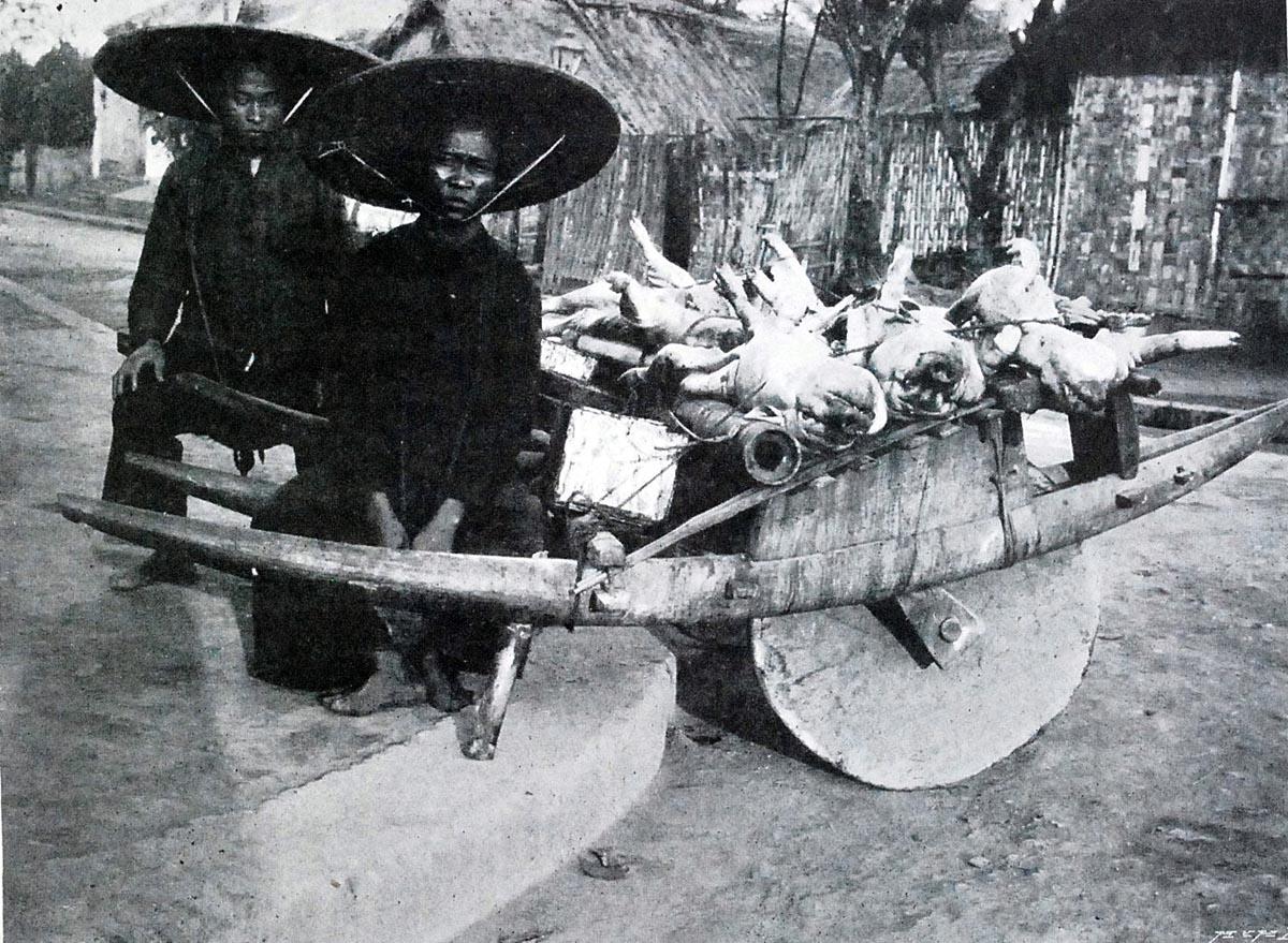 Những chiếc xe cút kít chuyên chở gạo cũng được cửu vạn trưng dụng làm xe chở lợn.