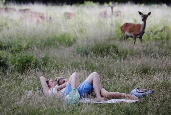 Một cặp đôi nằm nghỉ ngơi gần đàn hươu dưới thời tiết nắng nóng trong công viên Richmond, London, Anh.