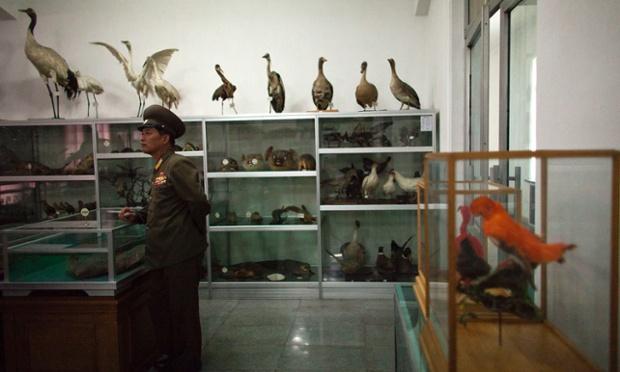 Một sĩ quan quân đội đứng bảo vệ các mẫu động vật tại một trường quân đội hàng đầu ở thủ đô Bình Nhưỡng, Triều Tiên.