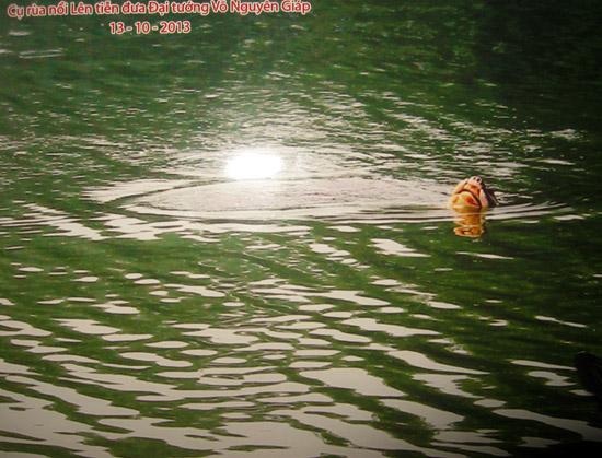 Bức ảnh cụ Rùa nổi được GS.Hà Đình Đức chai sẻ trên trang Facebook cá nhân vào tối qua (13/10).