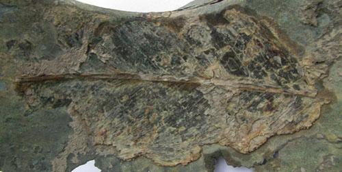 Mảnh nồi đồng được cho là có từ thời Lang Liêu (!?)