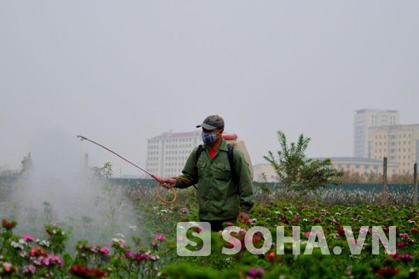 Ngoài ra, để hoa sinh trưởng, phát triển tốt cũng cần phải phun một số loại thuốc trừ sâu, bệnh.