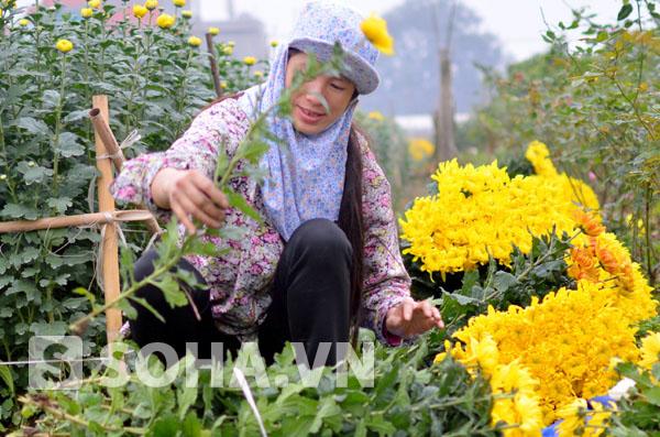 Cẩn thận xếp các bông hoa thành từng bó.