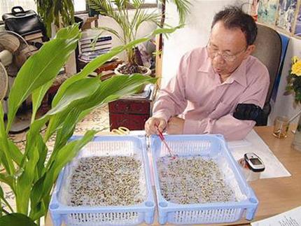 Viagra thiên nhiên dễ kiếm, mọc hoang ở Việt Nam 2