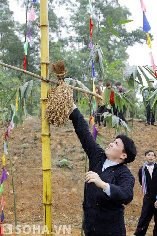 Thóc lúa được treo lên cây nêu, hàm ý mong muốn mùa màng bội thu.