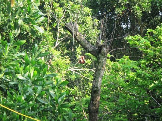 Một số bộ phận cơ thể của nạn nhân bị bắn lên cây