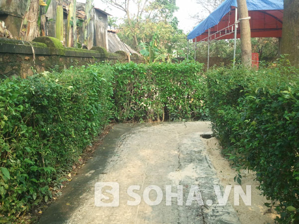 Hàng rào cây xanh trên con đường nhỏ dẫn vào khuôn viên nhà Đại tướng.