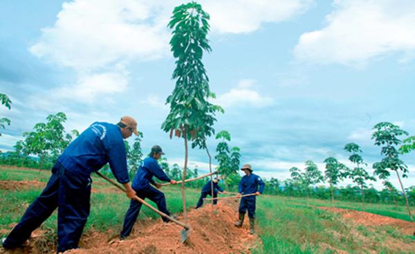 Hoàng Anh Gia Lai bị cáo buộc phá rừng trồng cao su và vận chuyển gỗ về Việt Nam