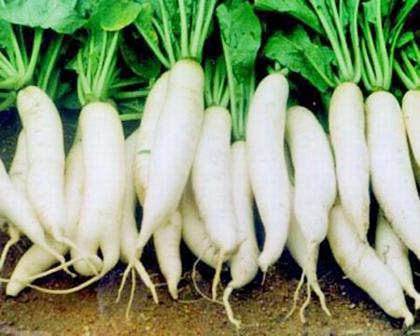Củ cải: Vô tình ăn với những thực phẩm sau rất bất lợi