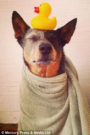 Jack sau khi thời gian tắm cân bằng một con vịt cao su trên đầu