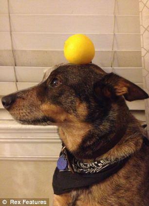 Jack con chó