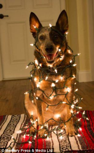 Jack, tất cả các gói lên trong ánh đèn Giáng sinh