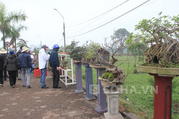 Những người xe ôm cho biết, hầu hết các loại cây cảnh đều được di chuyển từ chợ Viềng về đây.