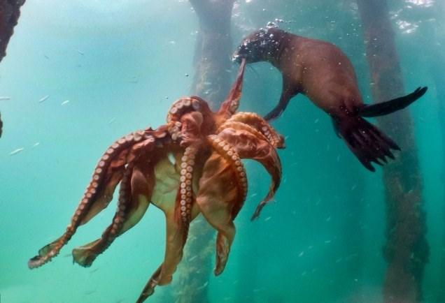 24h qua ảnh: Trận chiến khát máu giữa bạch tuộc và hải cẩu - Ảnh 2.