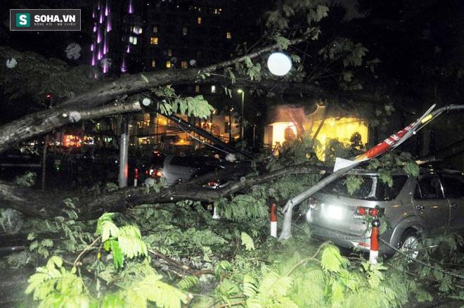 Cây bật gốc kéo ngã trụ điện, đè trúng 7 ô tô trong trận mưa lớn - Ảnh 5.