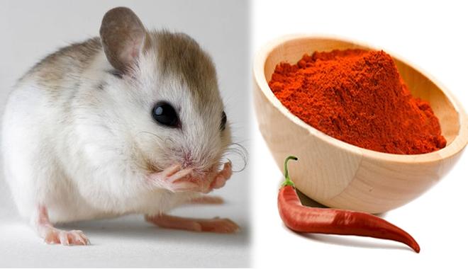 Không cần nuôi mèo, đặt bẫy, 7 món đồ nhà nào cũng có này sẽ khiến lũ chuột chạy bán xới - Ảnh 3.