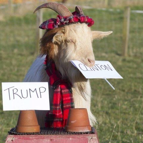 [TRỰC TIẾP] Bầu cử tổng thống Mỹ: Trump tự tin đang làm rất rất tốt ở bang chiến trường Florida và Bắc Carolina - Ảnh 2.