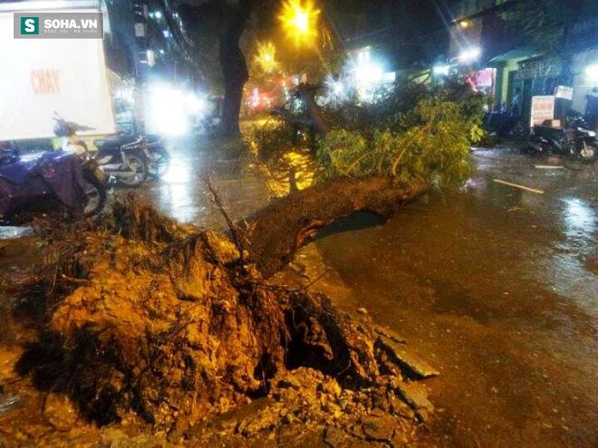 Cây bật gốc kéo ngã trụ điện, đè trúng 7 ô tô trong trận mưa lớn - Ảnh 3.