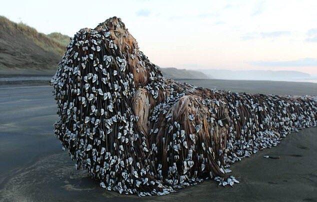 7 ngày qua ảnh: Sinh vật ngoài hành tinh khổng lồ dạt vào bờ biển New Zealand - Ảnh 3.