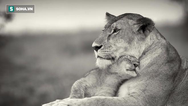 Những khoảnh khắc thấm đẫm tình người của các loài động vật - Ảnh 2.