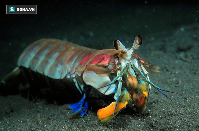 Chủ quan khinh địch, bạch tuộc bị con mồi nhỏ bé giã cho no đòn - Ảnh 2.