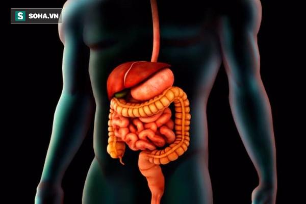 [Vietsub] Đây là cái kết khủng khiếp mà nội tạng của bạn phải chịu khi nhịn đói - Ảnh 1.