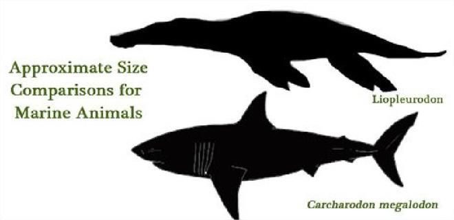 Trong lịch sử Trái Đất, kẻ nào mới xứng đáng làm đối của siêu cá mập Megalodon? - Ảnh 2.