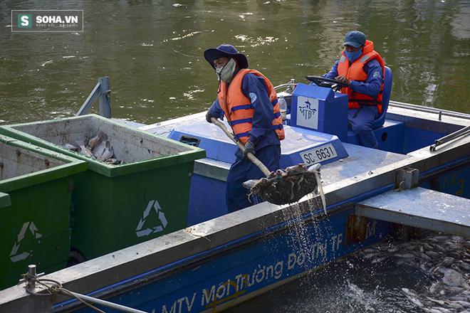 Công bố nguyên nhân cá chết bất thường tại TP Hồ Chí Minh - Ảnh 1.