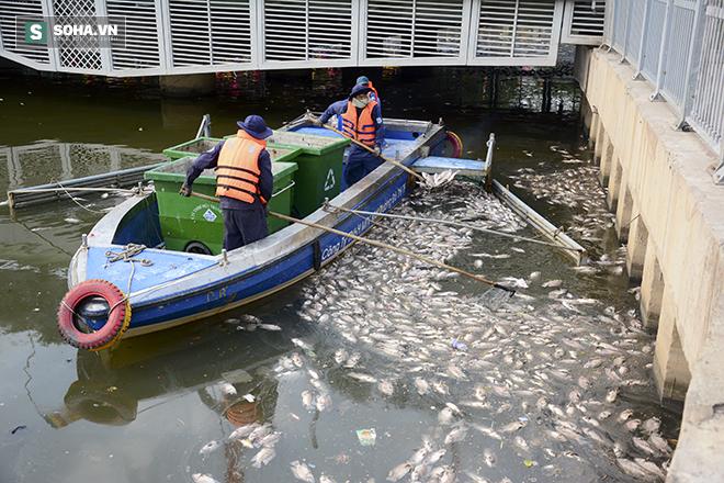 Công bố nguyên nhân cá chết bất thường tại TP Hồ Chí Minh - Ảnh 2.