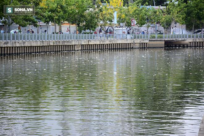 Công bố nguyên nhân cá chết bất thường tại TP Hồ Chí Minh - Ảnh 3.