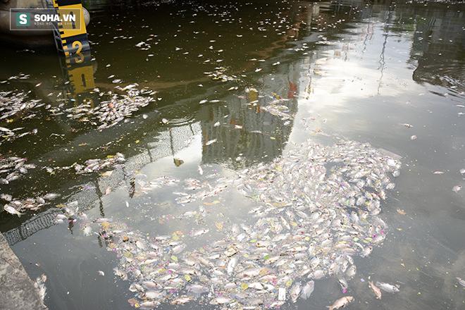 Công bố nguyên nhân cá chết bất thường tại TP Hồ Chí Minh - Ảnh 4.
