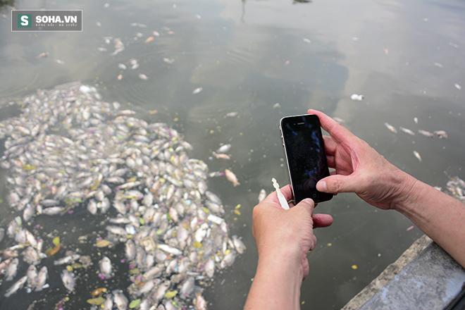 Công bố nguyên nhân cá chết bất thường tại TP Hồ Chí Minh - Ảnh 5.