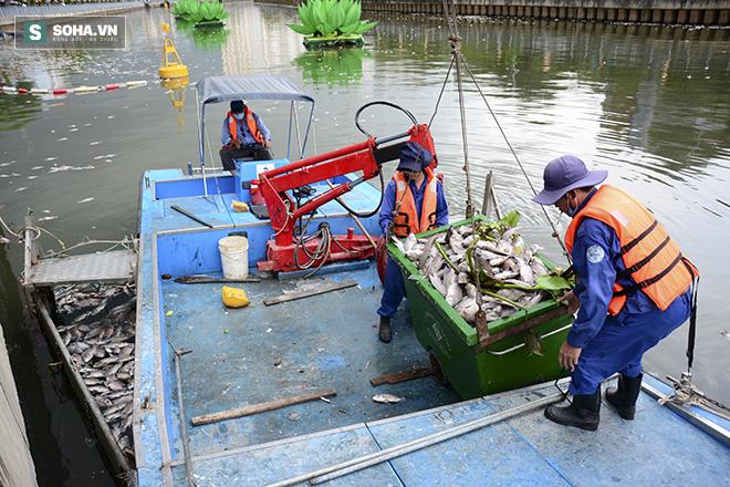 Công bố nguyên nhân cá chết bất thường tại TP Hồ Chí Minh - Ảnh 6.