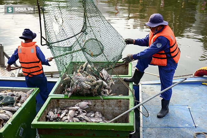 Công bố nguyên nhân cá chết bất thường tại TP Hồ Chí Minh - Ảnh 7.