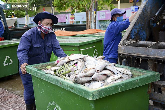 Công bố nguyên nhân cá chết bất thường tại TP Hồ Chí Minh - Ảnh 8.
