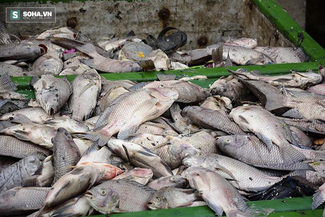 Công bố nguyên nhân cá chết bất thường tại TP Hồ Chí Minh - Ảnh 9.