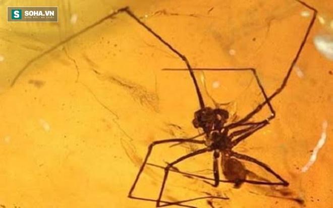 Phát hiện nấm 50 triệu năm tuổi trong một khối hổ phách - Ảnh 2.