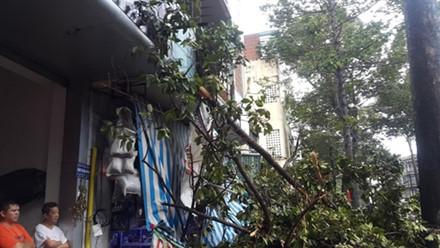 Đang đứng trước cửa tiệm bị cây cổ thụ 30m bật gốc đè tử vong - Ảnh 1.