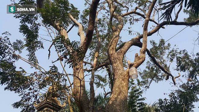 Người trả giá 49 tỷ đồng mua cây sưa đỏ quý ở Bắc Ninh mất hút, công an đến tận nhà tìm - Ảnh 3.
