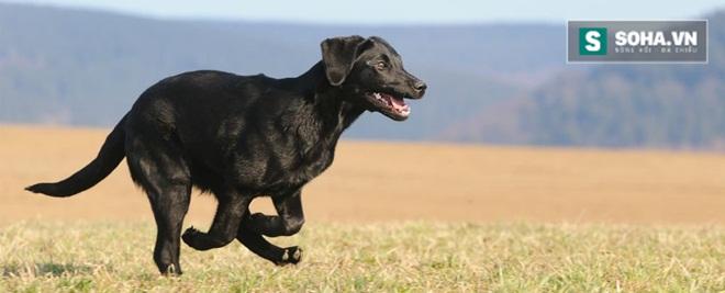 Vì sao chú chó này có thể vượt qua hơn 400 km để về với chủ cũ? - Ảnh 2.