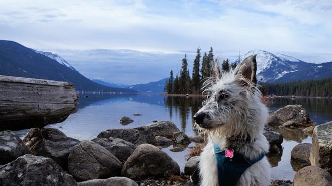 Vì sao chú chó này có thể vượt qua hơn 400 km để về với chủ cũ? - Ảnh 4.