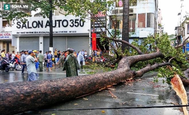 Đang đứng trước cửa tiệm bị cây cổ thụ 30m bật gốc đè tử vong - Ảnh 2.