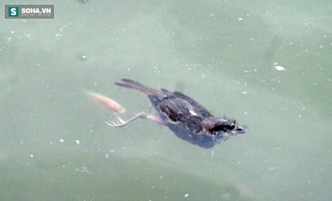Đội quân rình mò để chích điện bắt cá vừa được thả phóng sinh - Ảnh 16.