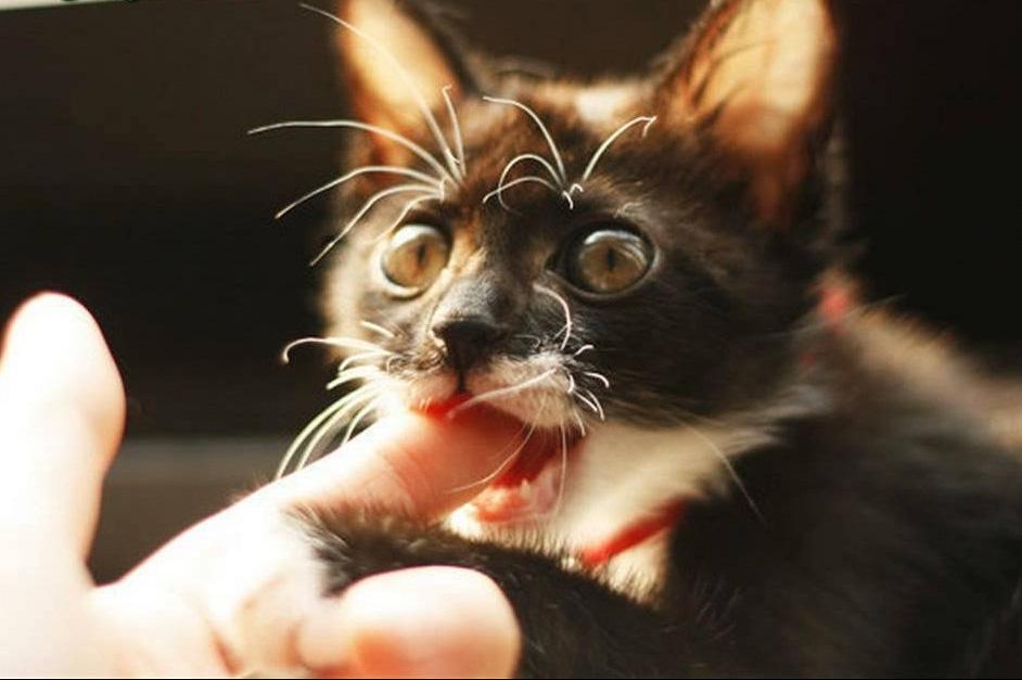 Nuôi chó, mèo cần biết thông tin này, nếu không muốn gặp họa - Ảnh 1.