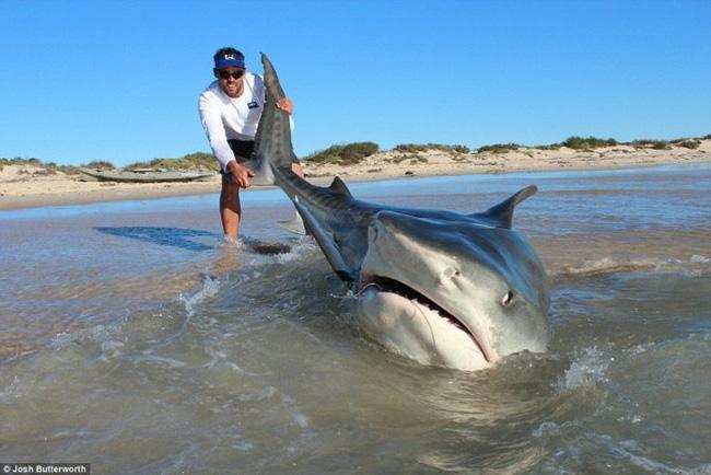 Thanh niên xuống biển kéo cá mập lên bờ chụp ảnh - Ảnh 1.