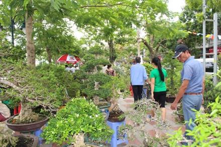 Hải Phòng: Cận cảnh những cây cảnh độc, lạ trị giá hàng tỷ đồng ở hồ Tam Bạc - Ảnh 1.