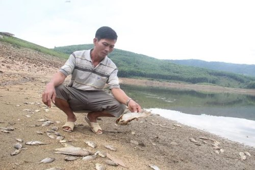 Cá chết hàng loạt, phủ trắng hồ ở Quảng Nam - Ảnh 1.